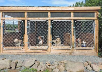 black-rock-stables-kennels-cattery-2